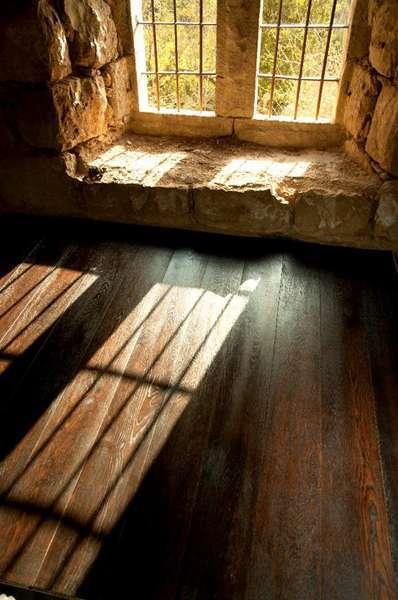 עץ אציל מבית שטיחי ישראל